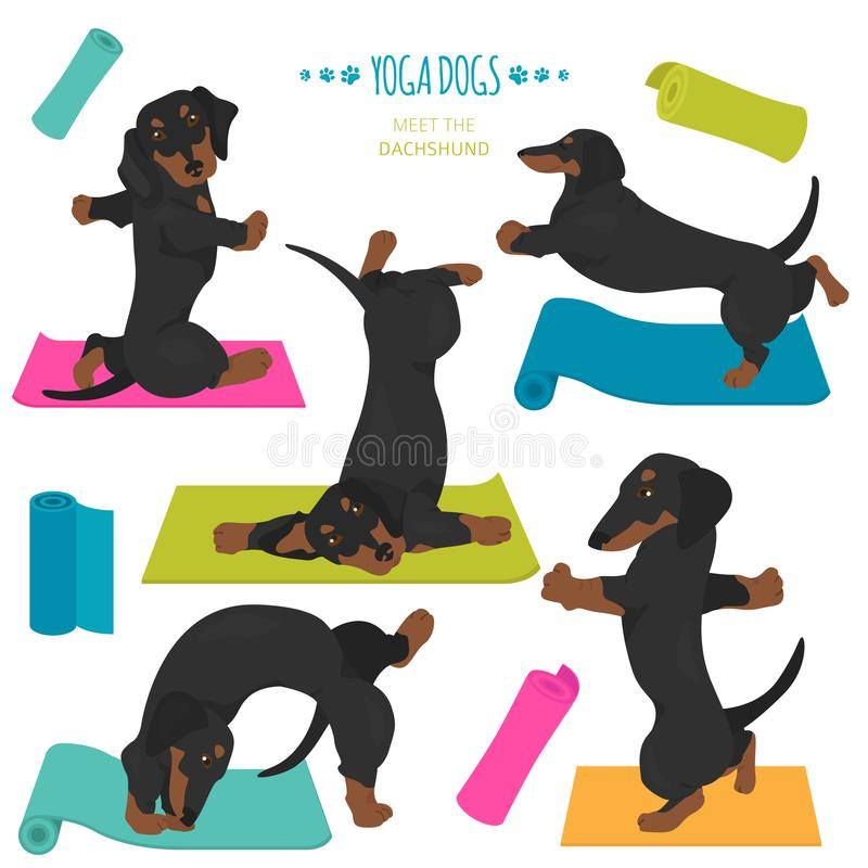 Poses et exercices de chiens de yoga Clipart de teckel illustration stock