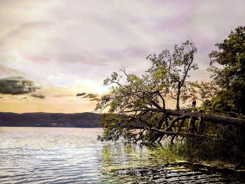Posição da criança em uma árvore caída que salta na água imagens de stock royalty free