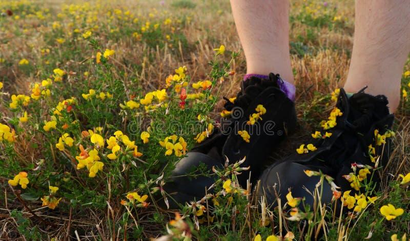 Posição da menina em um campo das flores fotos de stock royalty free