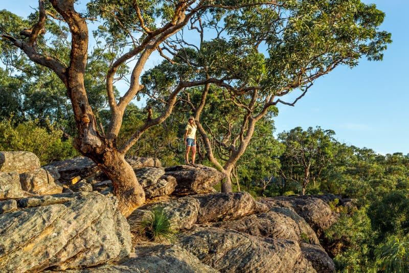 Posição da mulher sob grandes árvores de goma na borda da sarjeta da montanha fotos de stock royalty free