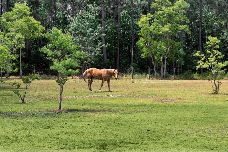 Posição do cavalo de Brown no prado verde Paisagem com cavalo marrom foto de stock royalty free