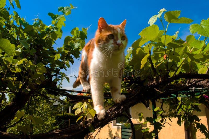 Posição do gato em uma planta de videira foto de stock royalty free