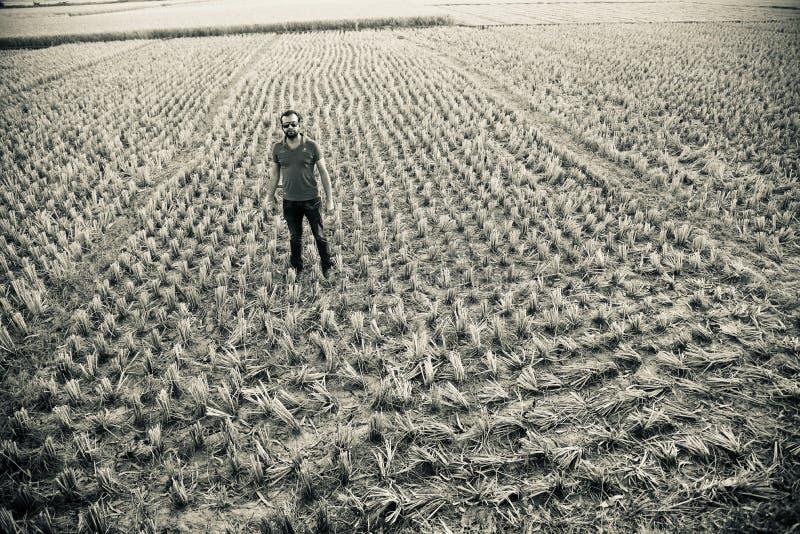Posição do homem em torno de uma foto original do campo agrícola imagem de stock