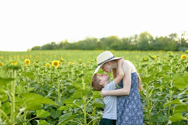 Posição grávida de beijo da mãe do filho pequeno feliz no campo de girassóis de florescência fotos de stock