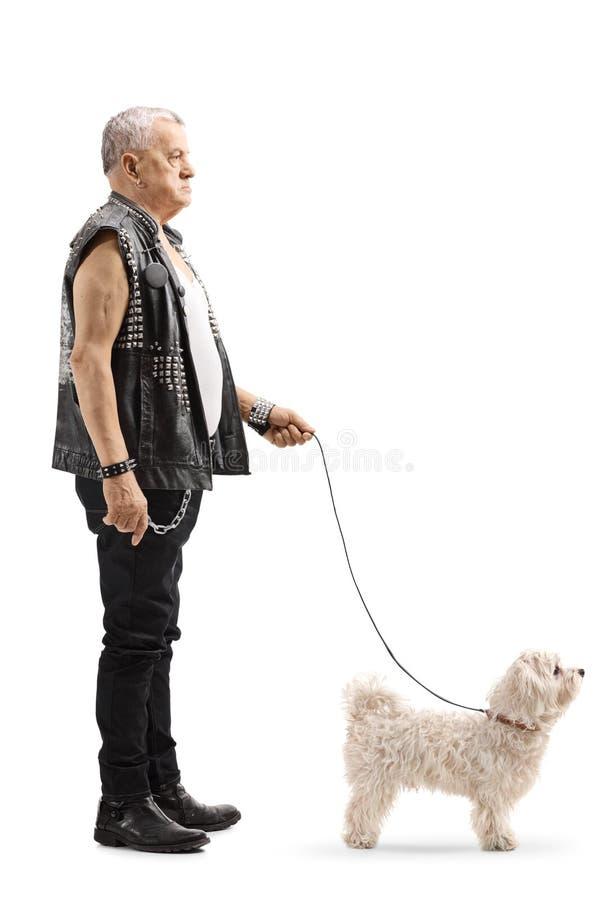 Posição madura do punker com um cão branco pequeno fotografia de stock