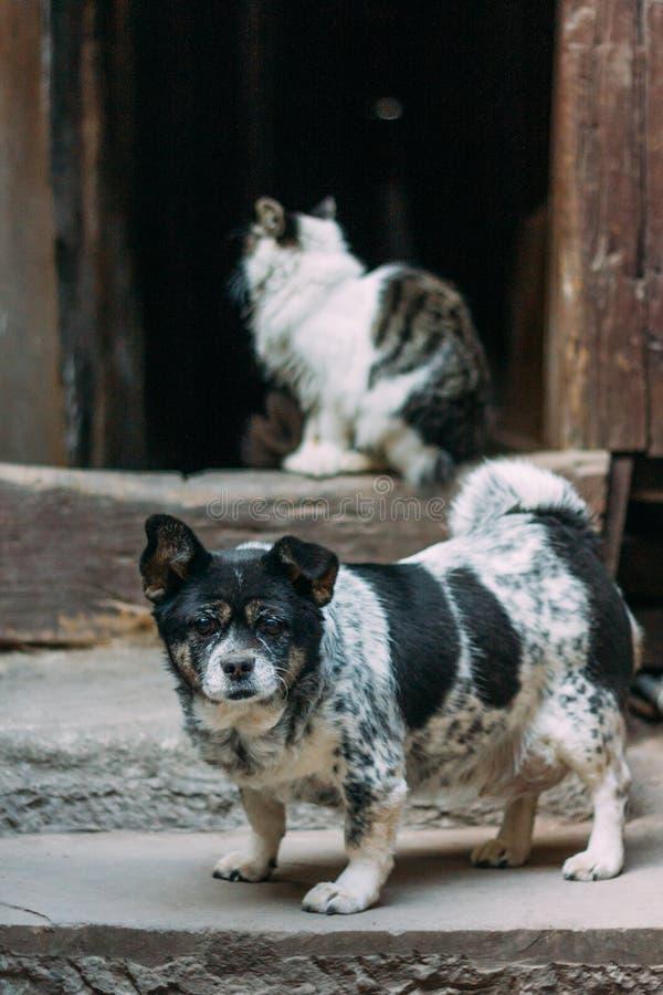 Posição preto e branco triste do cão na frente de um gato e de uma porta chinês-denominada foto de stock
