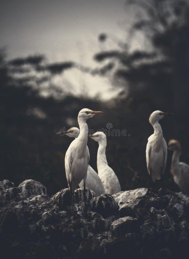Posi??o do grupo dos guindastes na terra seca dos peixes imagens de stock royalty free