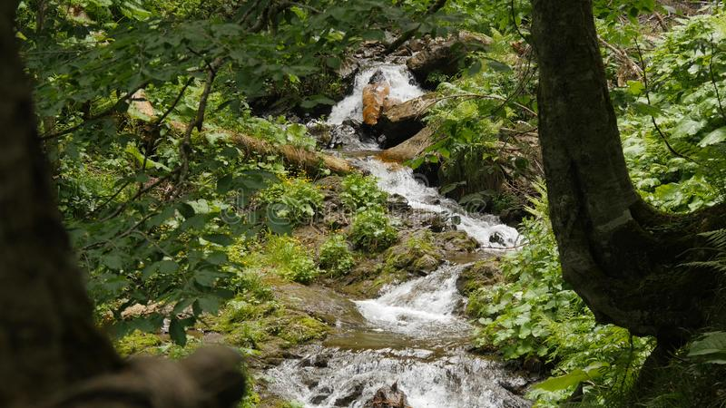Posibilidad muy remota de la peque?a cascada del bosque en las monta?as de Sochi imágenes de archivo libres de regalías