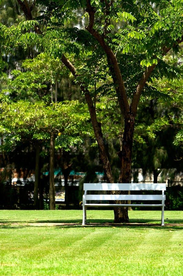 posiedzenie cieni fotografia royalty free