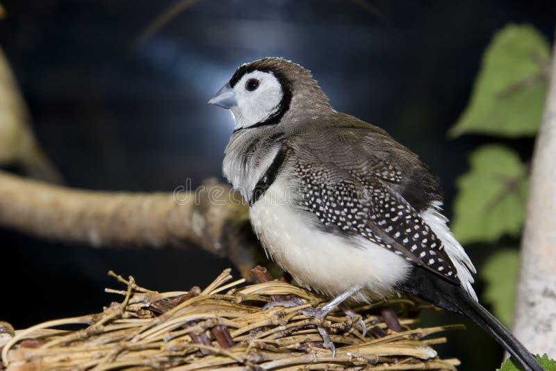 posiedzenie gniazdo ptaka obrazy stock