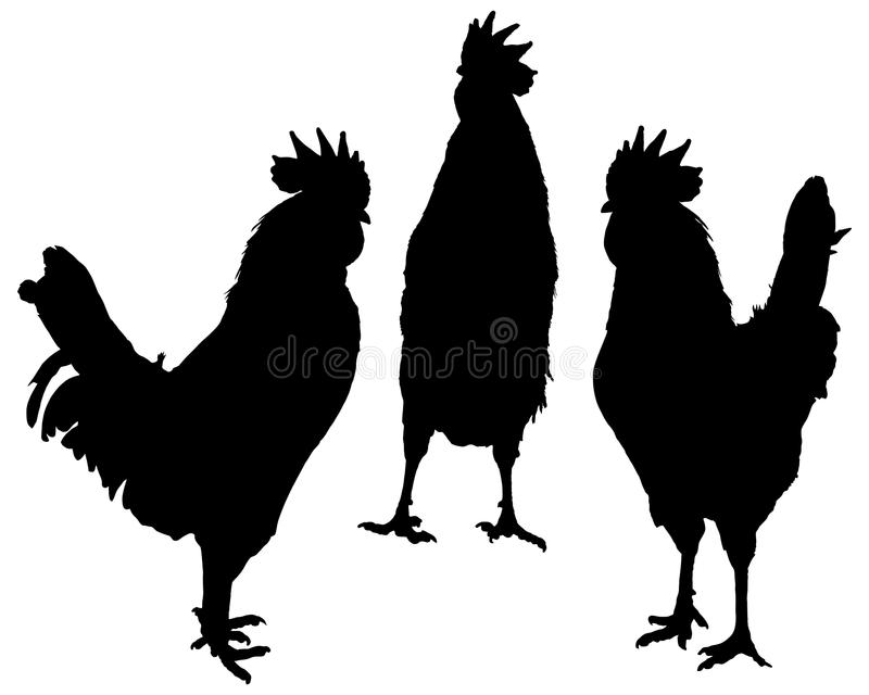 Posing rooster. Silhouettes set royalty free illustration