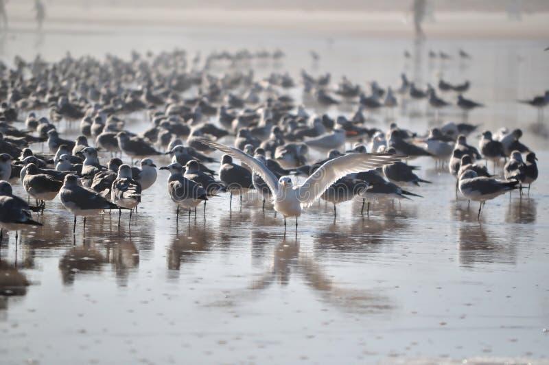 Download Posing Seagull stock image. Image of posing, seagull - 25211523