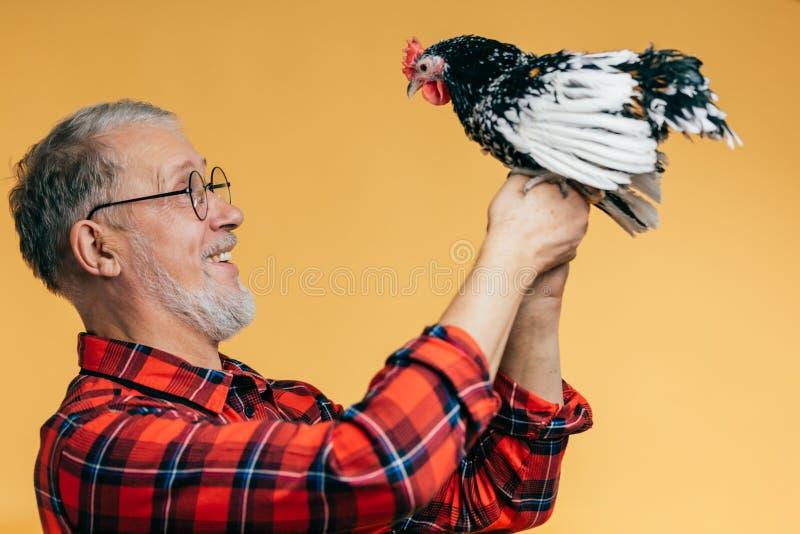 Positieve oude mens die een haan houden royalty-vrije stock foto