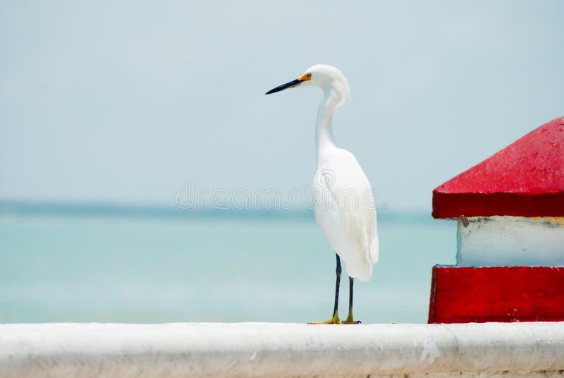 Position blanche de héron de plumage faisant face à l'océan photographie stock libre de droits