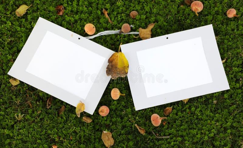 Position de cadre de photo sur l'herbe avec la dispersion de feuille de fruit et de figue photo libre de droits