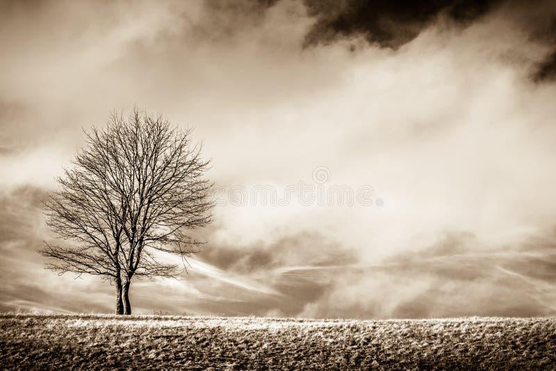 Position de solitude photo stock