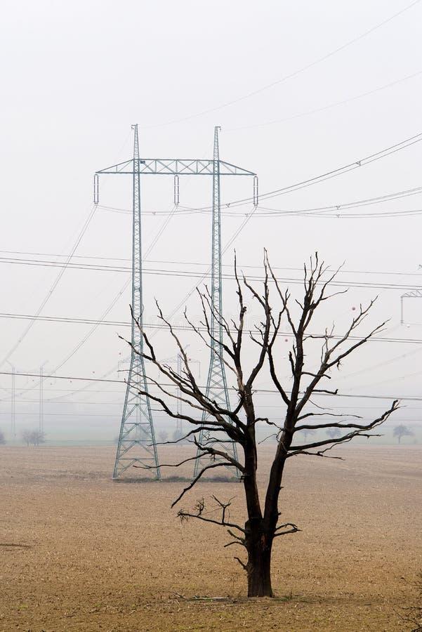 Position morte simple d'arbre dans le domaine vide avec les colonnes électriques à l'arrière-plan Saleté morte Mauvais effets d'a image stock