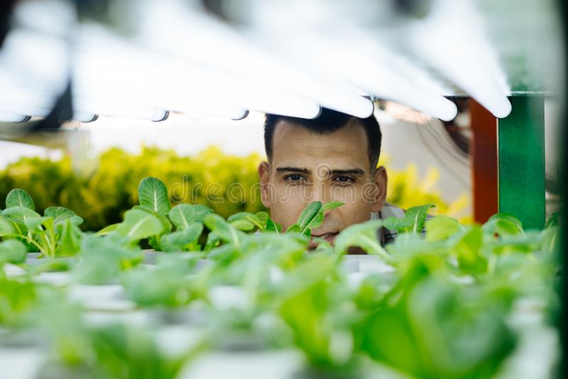 Position professionnelle aux yeux noirs d'agronome en serre chaude photos stock