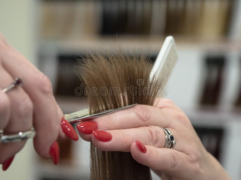 The technique of cutting hair with scissors. stock image