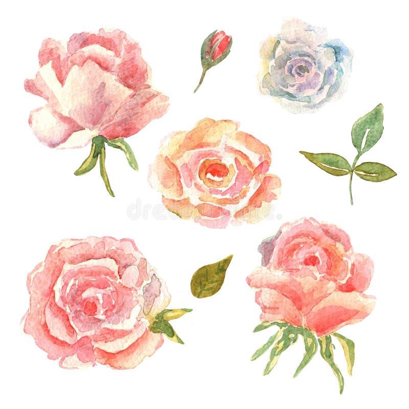 Dessin Rose Gold Ecosia