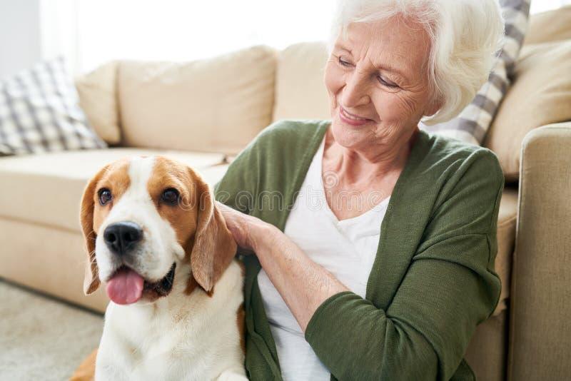 Positiv hög ägare som slår hunden arkivbilder