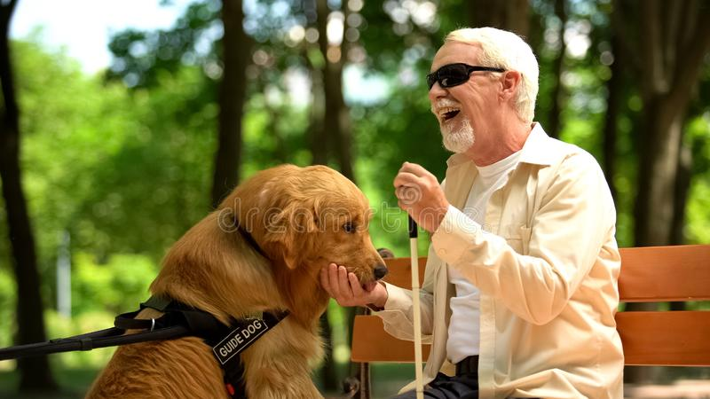 Positive blind man feeding guide dog, sitting in park, nutritious canine food. Stock photo royalty free stock photo