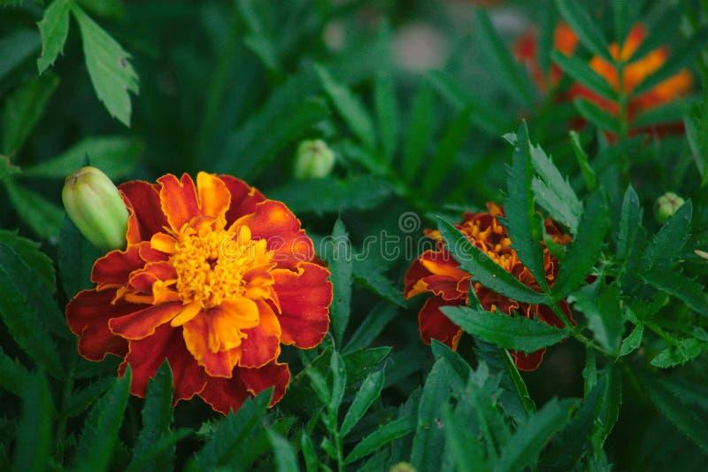 Positive Blume stockbilder