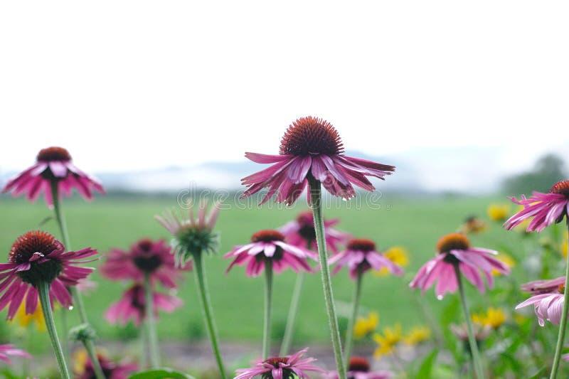 Positive Blumen, die oben schauen lizenzfreies stockfoto