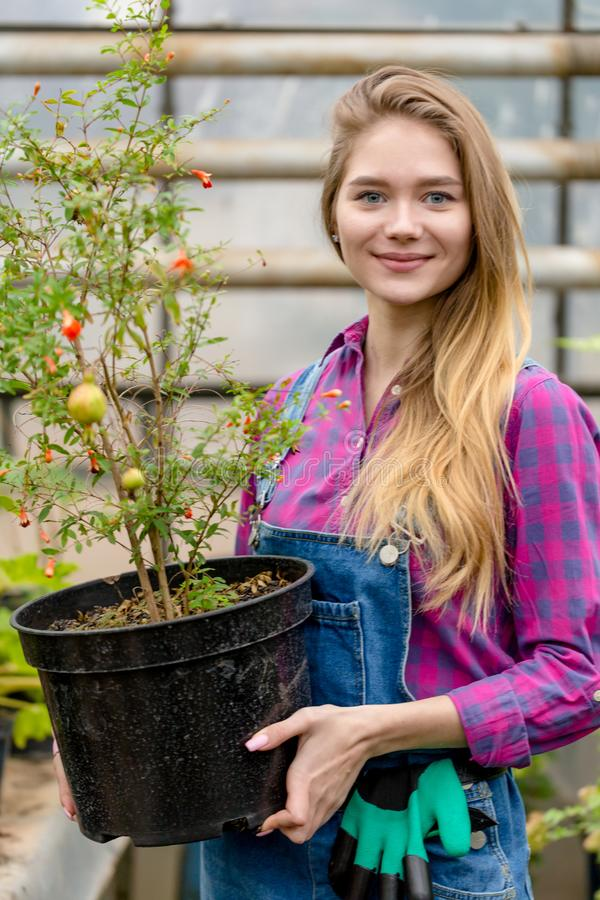 Positive gorgeous fair-haired woman with a big flower pot posing to the camera royalty free stock photography