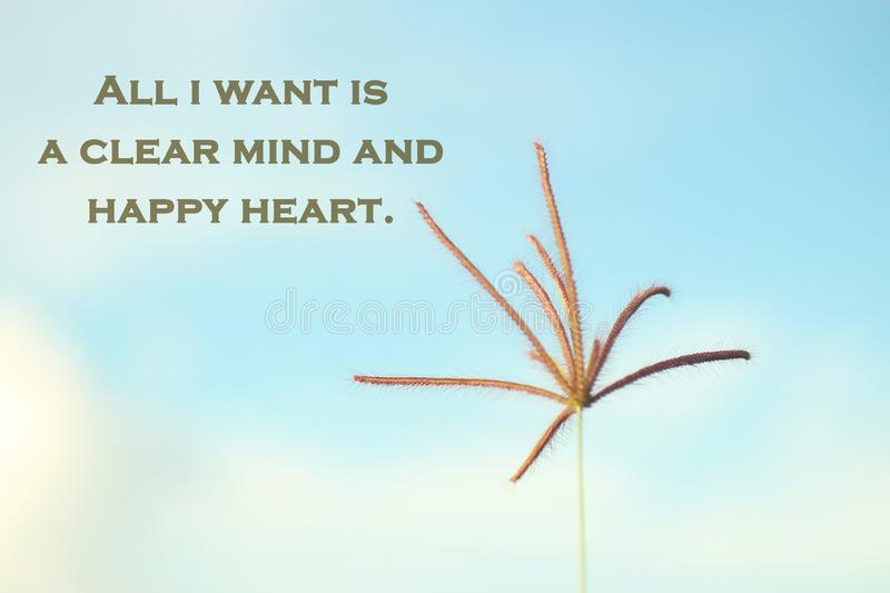 Positive inspirational motivational quote-all i want is a clear mind and happy heart. With single grass flower against the blurry royalty free stock images