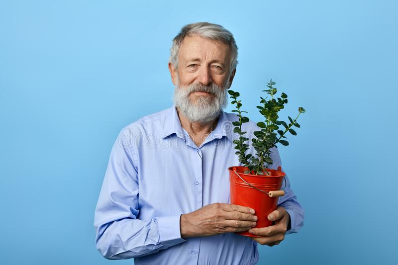 Positive kind old bearded man holding flower pot with green plant house stock photo