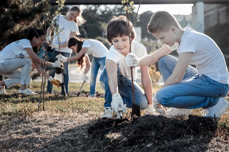 Positive smart boys planting a tree stock image