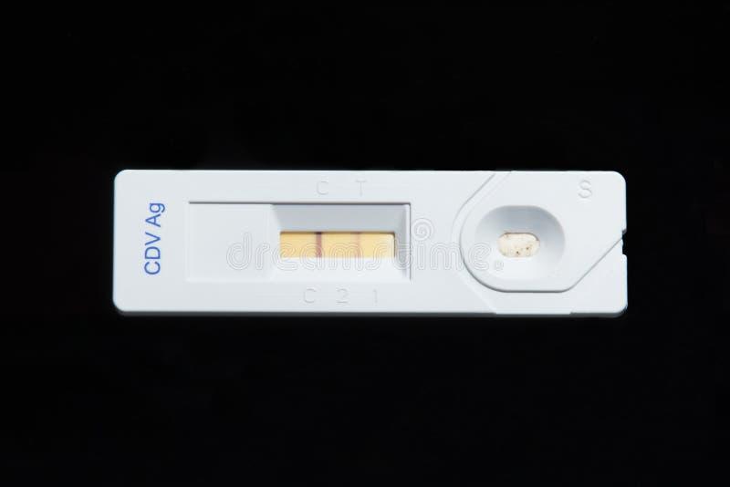 304 Positives Testergebnis des Hundestaupevirusantigentests Schwarzer Hintergrund lizenzfreies stockfoto