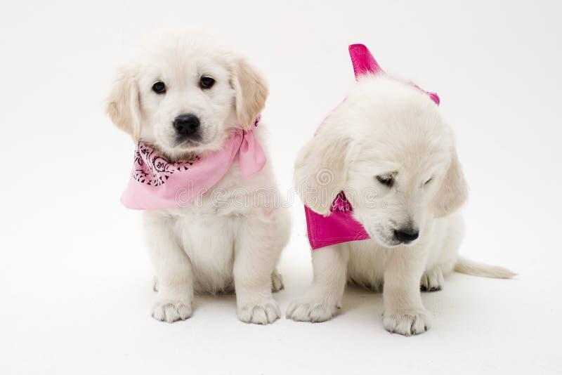 Posizione dei cuccioli immagini stock