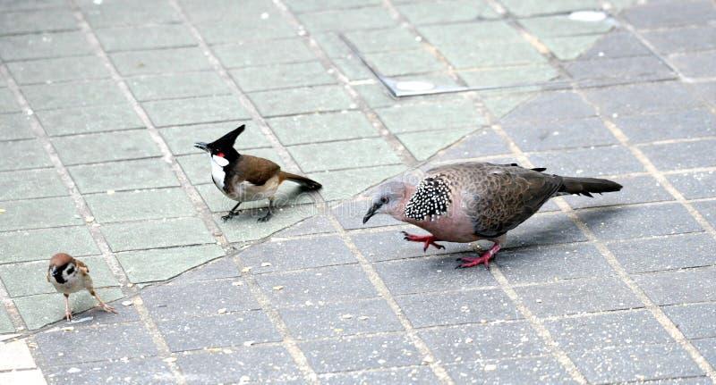 Pospolici ptaki w Hong Kong zdjęcie stock