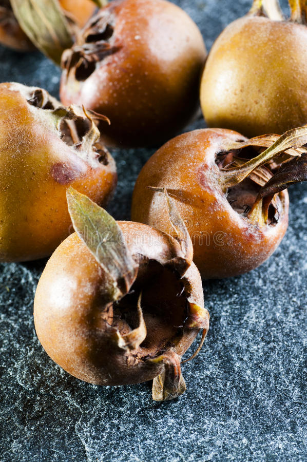 Pospolita niesplik owoc obraz stock