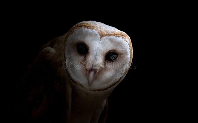 Pospolita stajni sowa zamyka up (Tyto albahead) fotografia stock