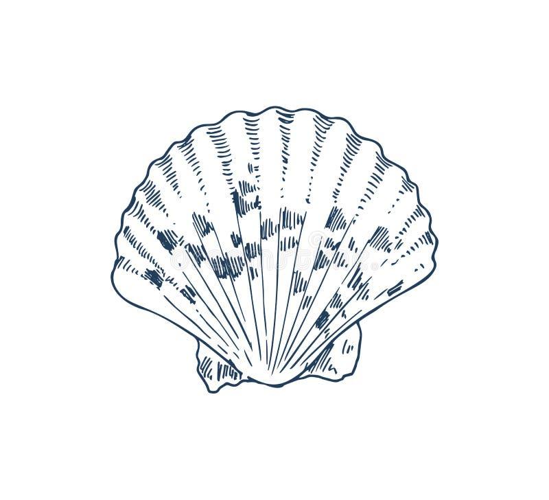 Pospolitego Cockle Saltwater milczka Specie Jadalny plakat ilustracji