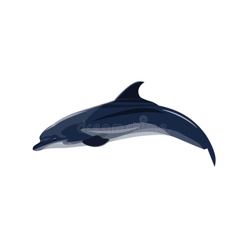 Pospolitego delfinu wektor royalty ilustracja