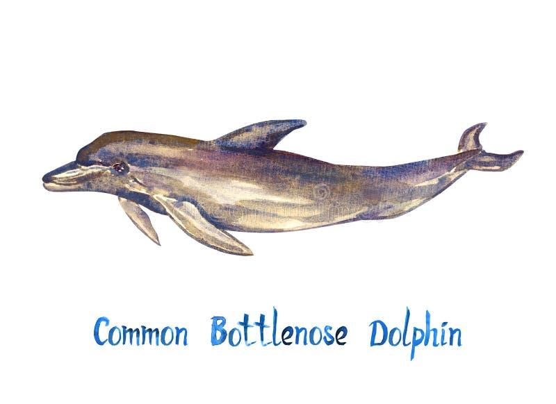 Pospolity bottlenose delfin, odizolowywający na bielu ilustracja wektor