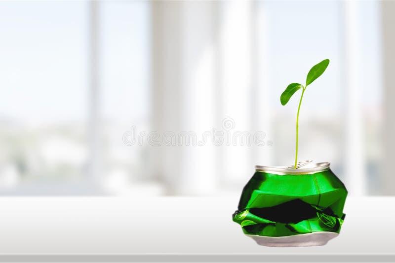 Possa riutilizzato per la coltura della pianta nuova fotografia stock libera da diritti