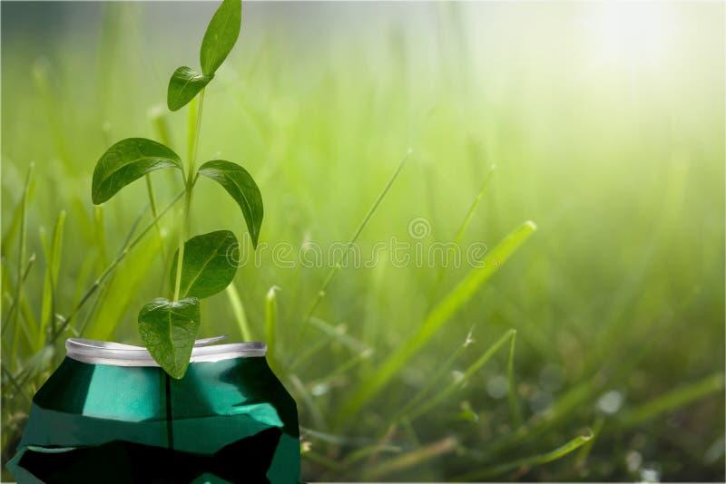 Possa riutilizzato per la coltura della pianta nuova fotografie stock libere da diritti