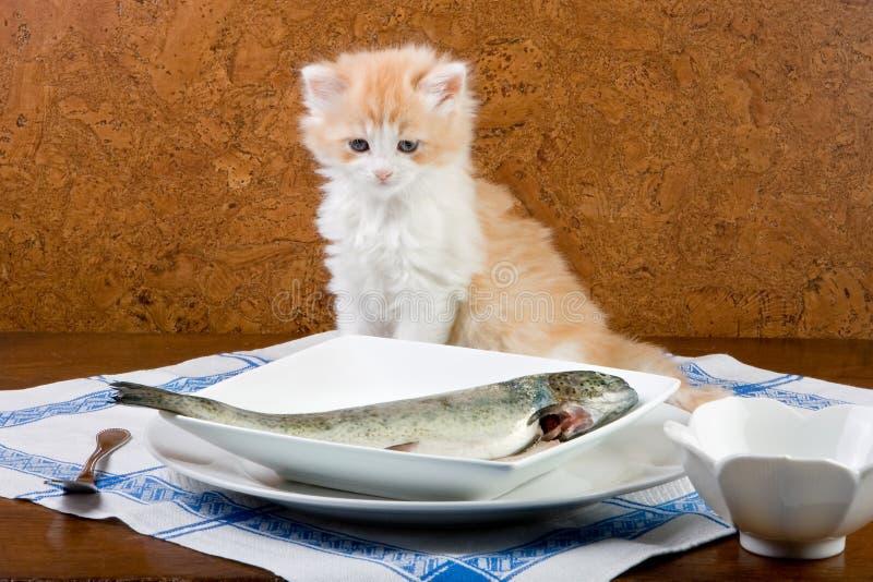 Posso eu comer este fotografia de stock