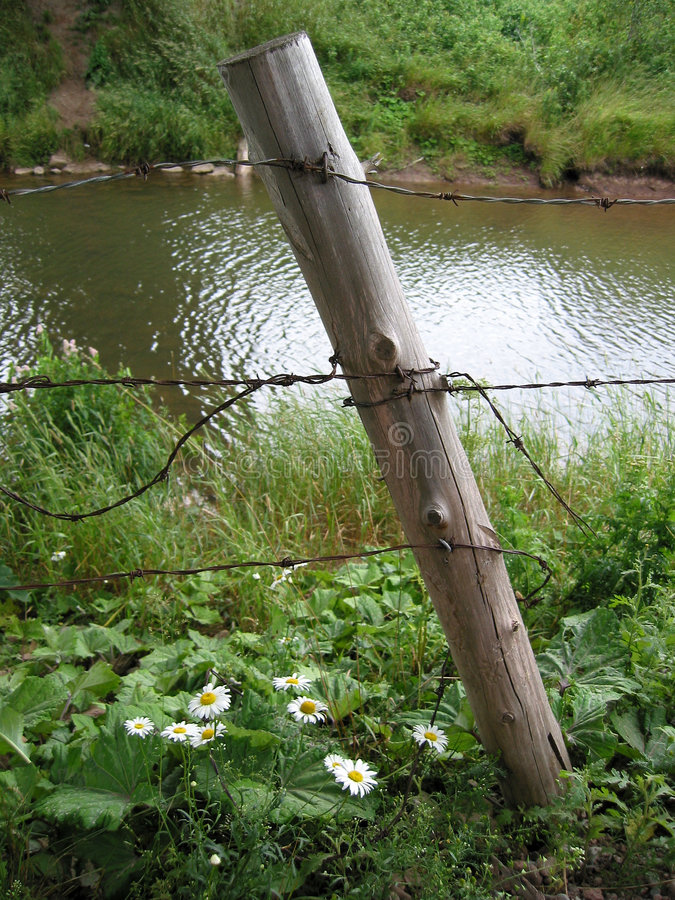 Download Post and Daisy stock photo. Image of posts, fences, petal - 5908