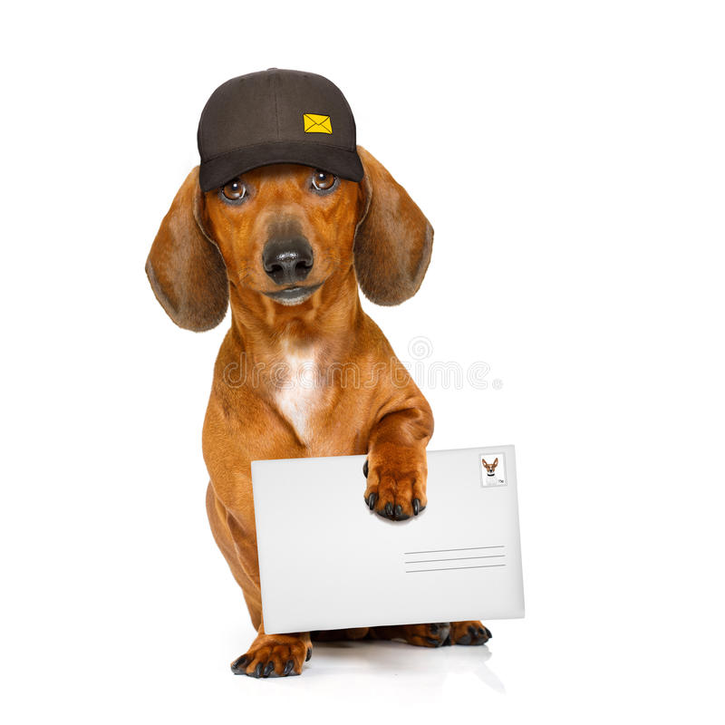 Post delivery dachshund sausage dog royalty free stock image