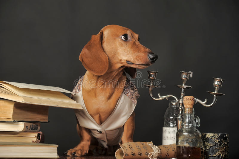 Post doctorate dachshund with books and candlesticks royalty free stock photos
