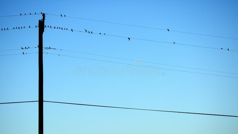 Post With Wire And Bird Free Public Domain Cc0 Image