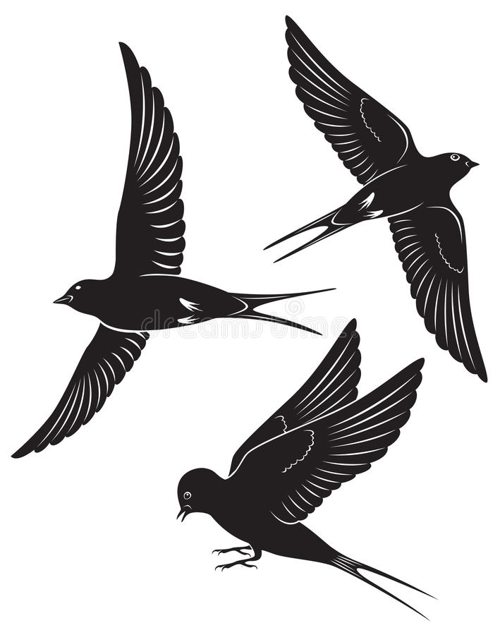 Ptasia dymówka ilustracji