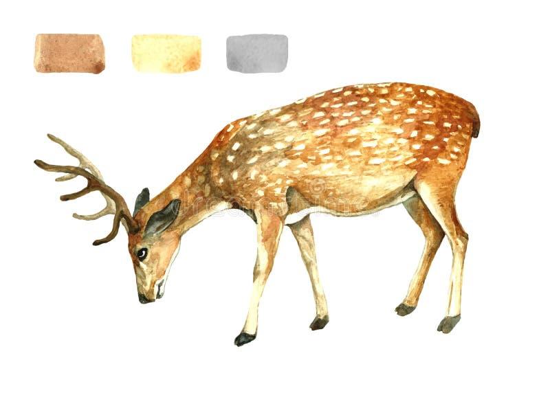 Postać rogaczy lasowe farby ilustracji
