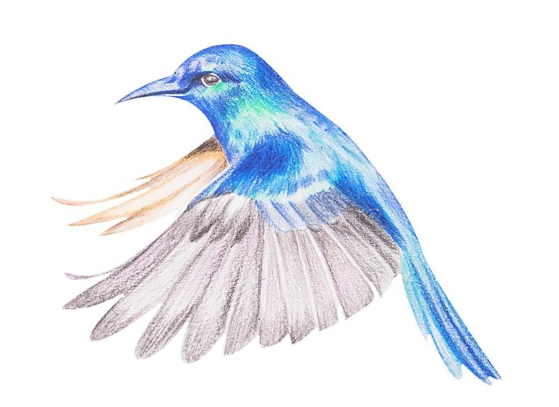 Postaci hummingbirds z barwionymi ołówkami handwork ilustracja wektor